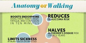 anatomy of walking tw mar 16