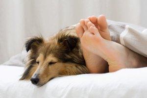pets not pills mayo tw 25416