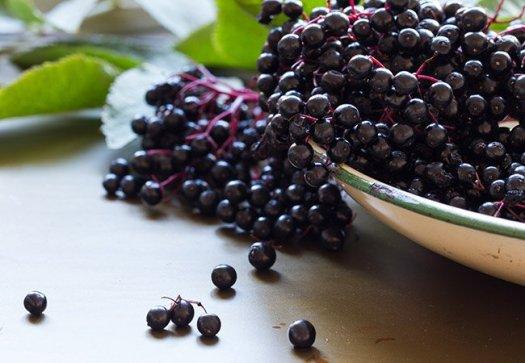 cleveland elderberry